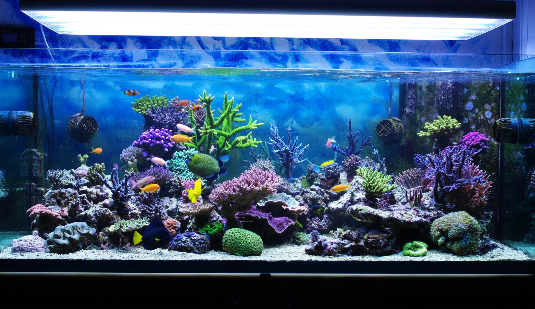 Poissons d aquarium granby saint jean sur richelieu for Vente poisson aquarium particulier
