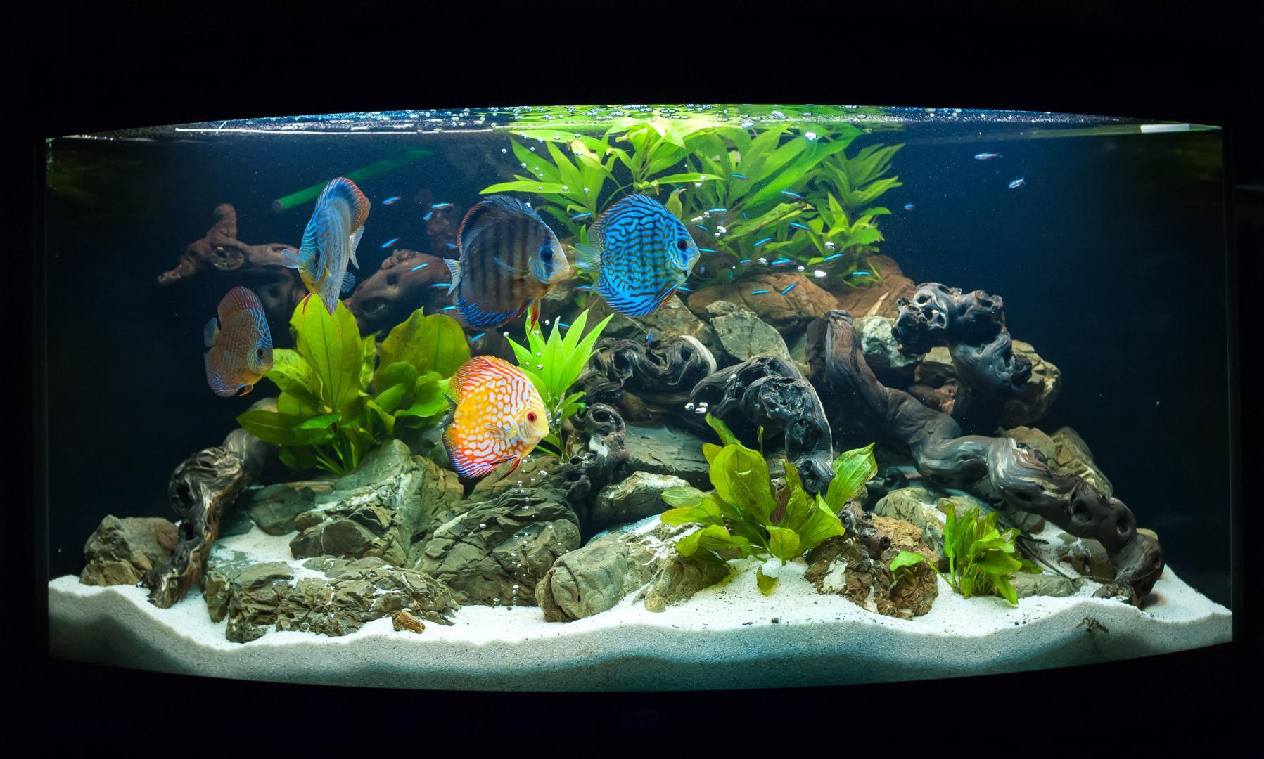 Aquarium eau douce granby saint jean sur richelieu for Poisson aquarium douce